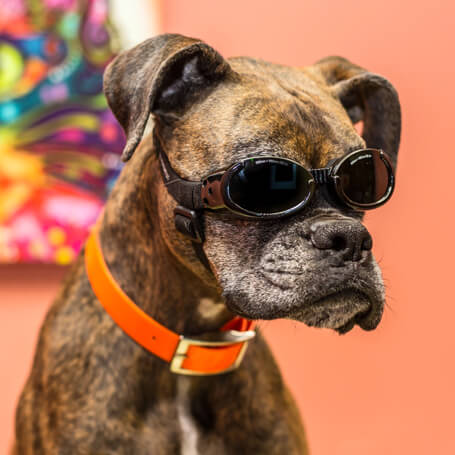 Arizona Pet Laser Therapy